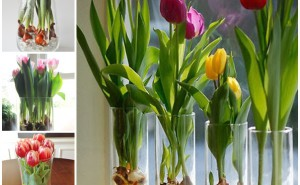 grow-tulips-in-a-vase-wonderfuldiy