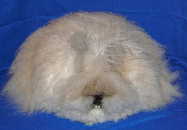 Ангарский кролик